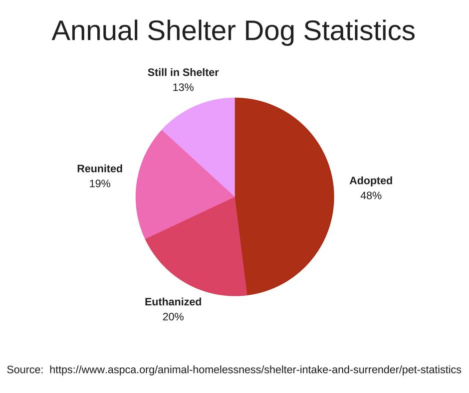 Shelter-Dog-Statistics
